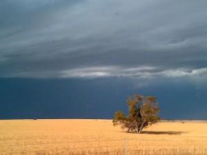 an empty wheat field